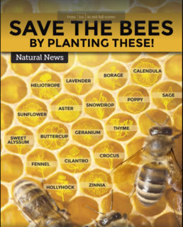 Save The Bees Plantings