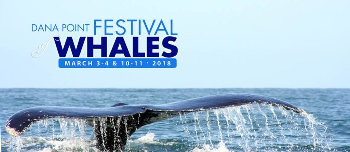 Festival Of Whales