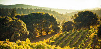 The Wine Country Landscape