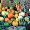 My Edible Garden Series What To Do In October With Steve Hampson