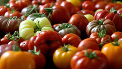 Tomatomania! Your Guide To Perfect Home Grown Tomatoes With Scott Daigre
