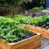 Raised Bed Seminar With David Rizzo