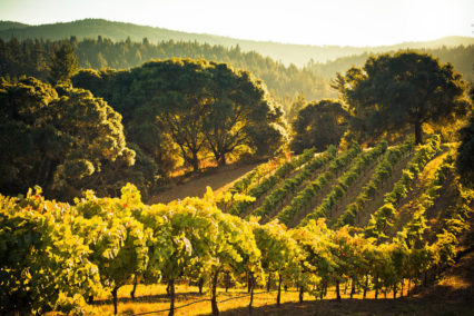 Friday Evening Tasting @ The Wine Country - Signal Hill