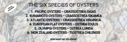 Oyster Answer