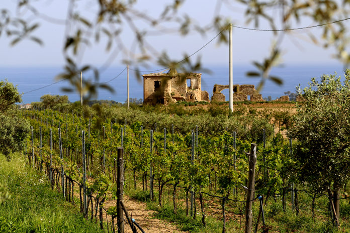 Old Vine South Italy Trip 2020